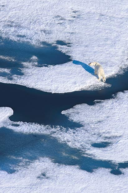 The Arctic Refuge