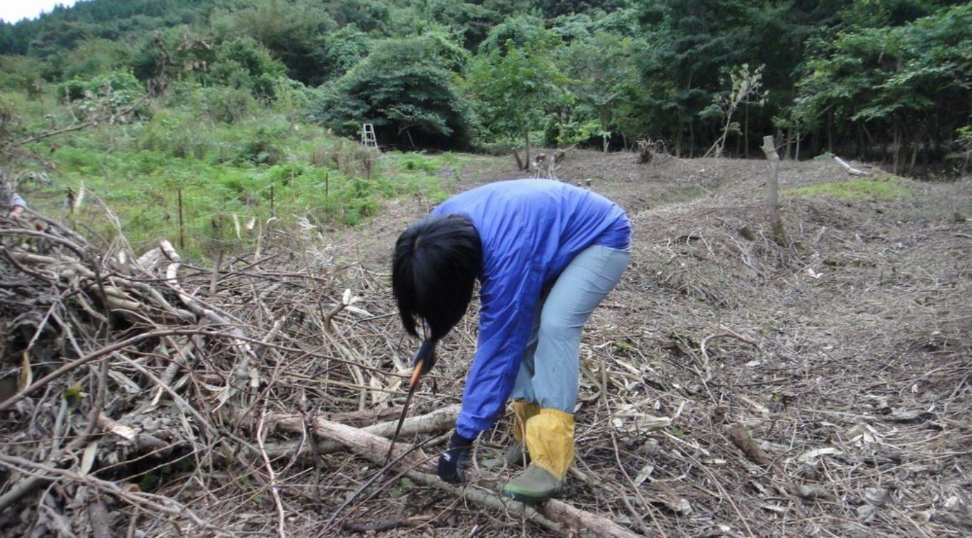 作業に専念する伊藤。間伐した樹木は材として活用される。写真:伊藤 智子