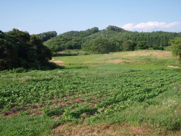 森林とつながり里山を形成する有機農業環境。写真:伊藤 智子