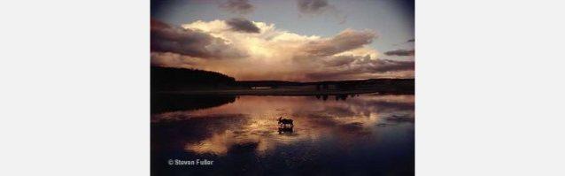 Garish Moose(きらめくムース)。Photo: Steven Fuller