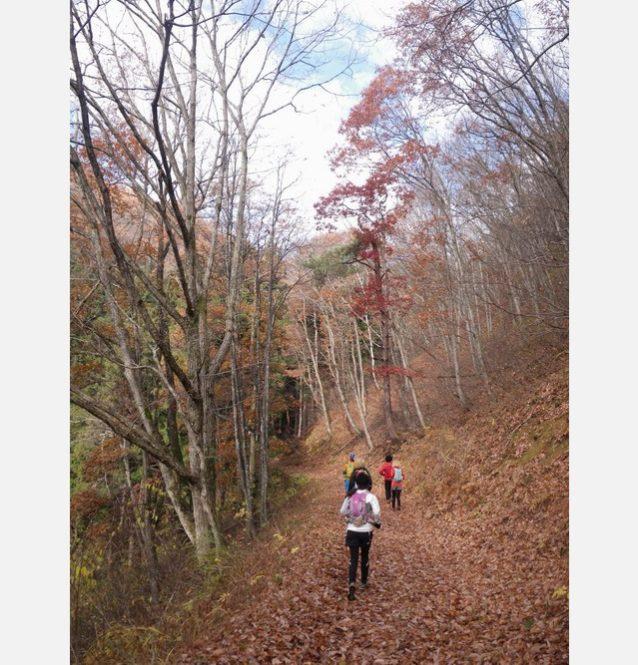 斑尾・大池から続く落ち葉がふかふかのトレイル。写真:篠 健司