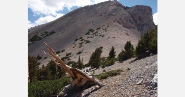 ネバダ州東部のマウント・モライアの山頂へつづくトレイル。Photo: localcrew