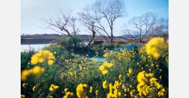 春の川辺川。漁を待つ川舟のまわりに黄色い菜の花が咲く。熊本県相良市 写真:村山 嘉昭 環境エッセイ「球磨川の夢」を読む