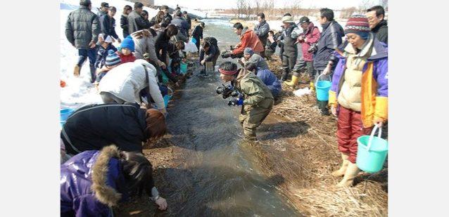 旭川石狩川サケの天然産卵復活を目指す。写真:大雪と石狩の自然を守る会