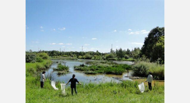 あいの里公園。写真:カラカネイトトンボを守る会