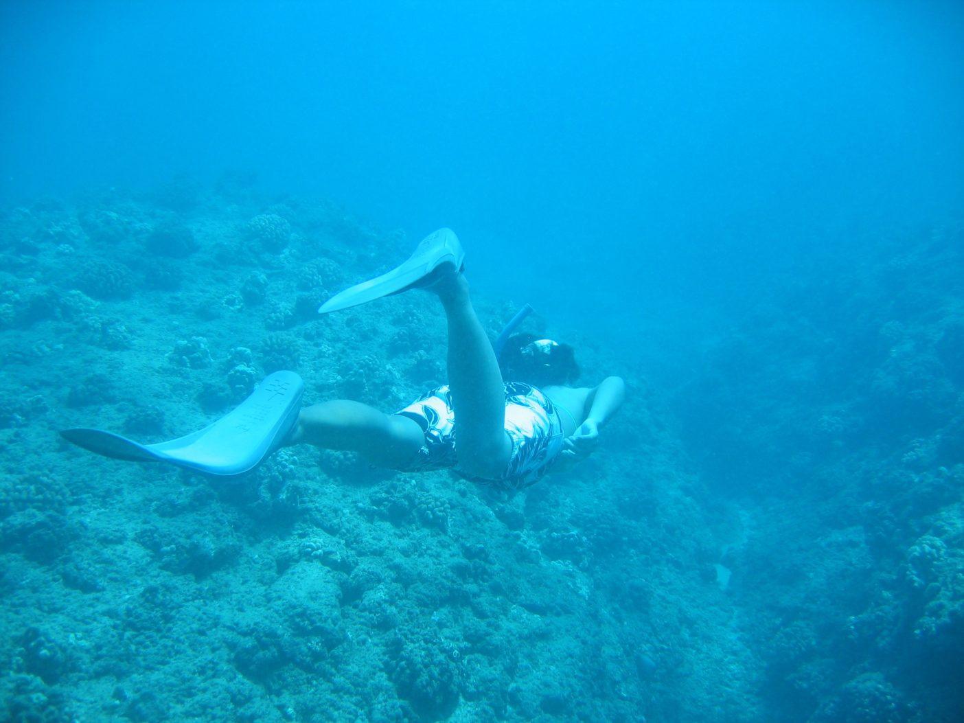 マウイ島にて、リーフシャークの捜索中。写真:松宮愛
