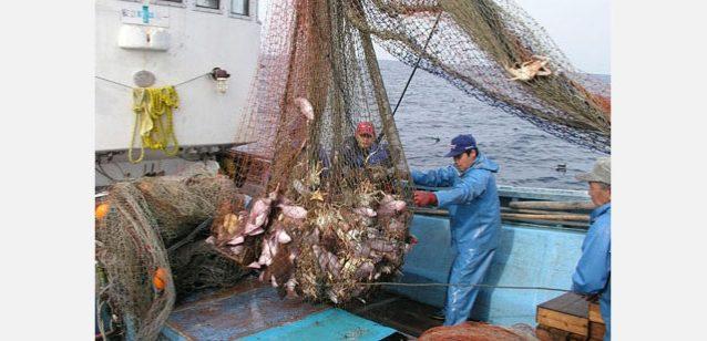 網揚げのようす。写真:京都府農林水産技術センター海洋センター