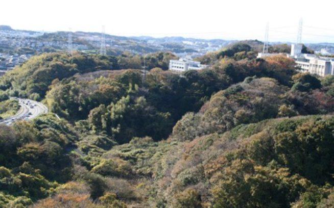瀬上沢西の森。里山が削られ、谷戸が埋められて、商業施設や宅地となる。写真:角田 東一