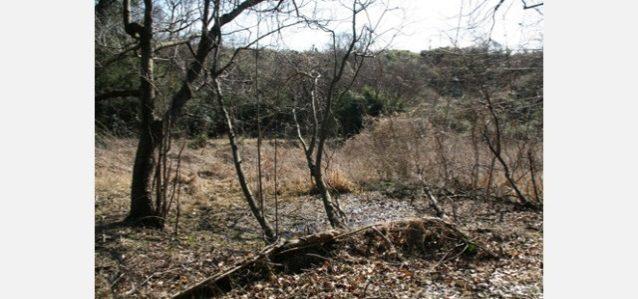 猿田谷戸。良好な生物相が残されている湿地。写真:角田 東一