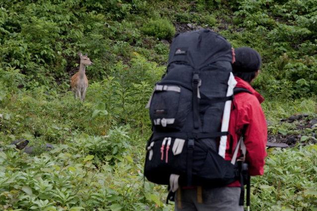 衣食住をバックパックに収納し、山のなかを自由に旅する。北海道/知床