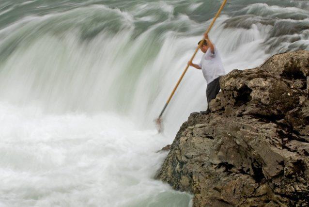 バルキー川のサケをかぎざおで引き上げるウィツウィテン族の男性。ブリティッシュ・コロンビア Photo: Paul Colangelo