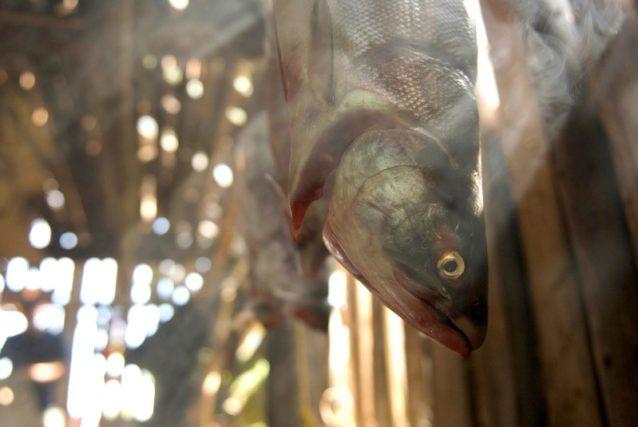 スティキーン川にあるタールタンのスモークハウスにて吊るされるサケ。ブリティッシュ・コロンビア、タールタン・ネイションズ Photo: Paul Colangelo