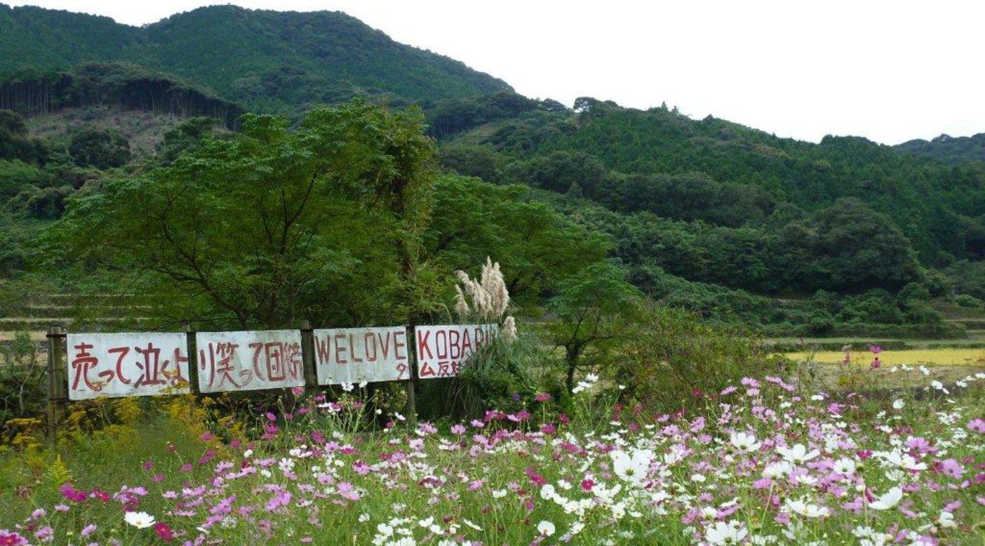 川原のコスモスと看板(売って泣くより笑って団結 WE LOVE KOBARU 写真:松本美智恵