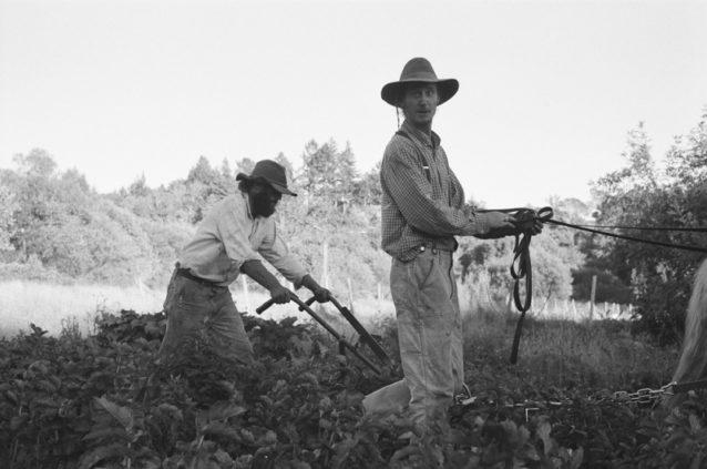 農耕馬で耕作するアダムとライアン。彼らは仕事と引き換えに僕らを3日間滞在させてくれた。市場に製品を配達するときは大急ぎで仕事をするところも見せてくれた。Photo: Kanoa, Kellen, Dan