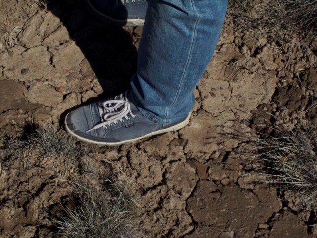 エスタンシア・エル・クロノメトロのこの辺りは、長いあいだ羊が草を食み放題だったが、このような状況は何百万匹もの羊が生息するパタゴニア地方各地で見られる。羊は好きな草を根元まで食べてしまうため草は枯れるかひどく弱り、表土は風や雨にさらわれ、やがて砂漠と化す。水は土中に染み込むかわりに流れ出し、炭素の吸収が悪くなり、そして原生動物のグアナコ(ラマに似たラクダ科の動物)やチョイケ(ダーウィン・レアとも呼ばれる大型の飛べない鳥)や羊が食べる十分な牧草がなくなる。