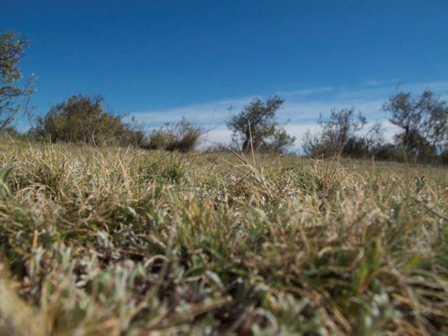 羊の目線で見る草原