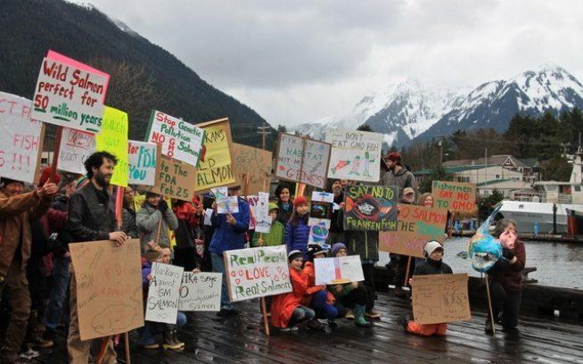 遺伝子組み換えサーモンは「人間の健康や環境にリスクは呈さない」としたFDAの決定に対し、地域集会にて異議を唱える小さなアラスカ沿岸の町、シトカの150人の住民たち。Photo: 〈Sitka Conservation Society〉
