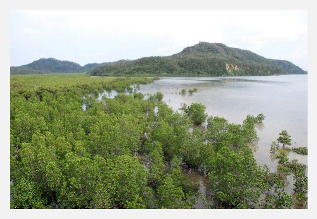 浦内川の河口に広がる国内最大規模のマングローブ群生地。写真:中根 淳一