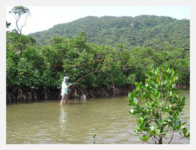 小さな水路に入り丹念にマングローブ際を探っていく。写真:中根 淳一