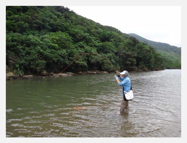 マングローブや岩の隙間へ的確にフライを投入できれば、プレッシャーという言葉とは無縁の魚達が素直に反応してくれる。写真:中根 淳一