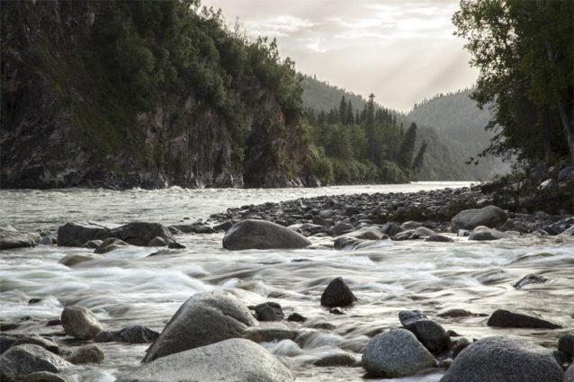 スシトナ-ワタナ・ダム建設予定地のすぐ上で、流れの速い澄んだデッドマン・クリークがスシトナ川本流に合流する。Photo: Travis Rummel