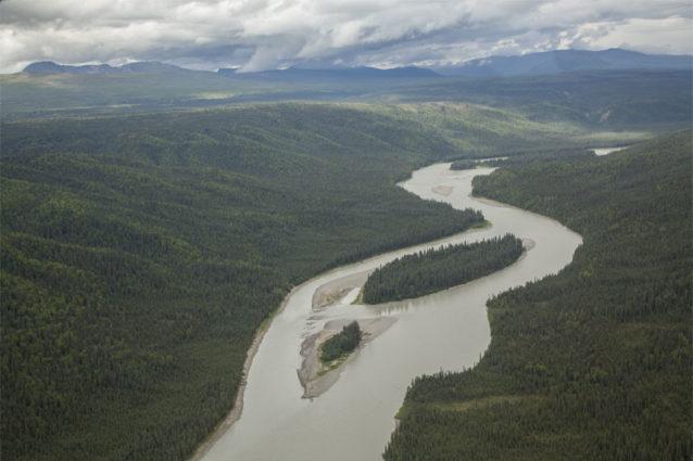 全長68キロの貯水池はスシトナ川のサケ5種やカリブーやムースの主要生息地に悲惨な影響を及ぼすだけでなく、2万エーカーの手つかずの原生林も水没させる。Photo: Travis Rummel