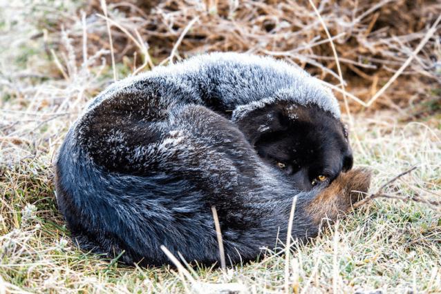 最初の夜は寒かった。地元の動物たちは僕らより寒冷な環境に順応していることは明らかだった。Photo: Marko Prezelj