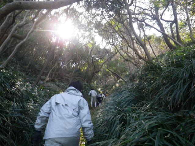 宇和島に上陸し、山林へ分け入る