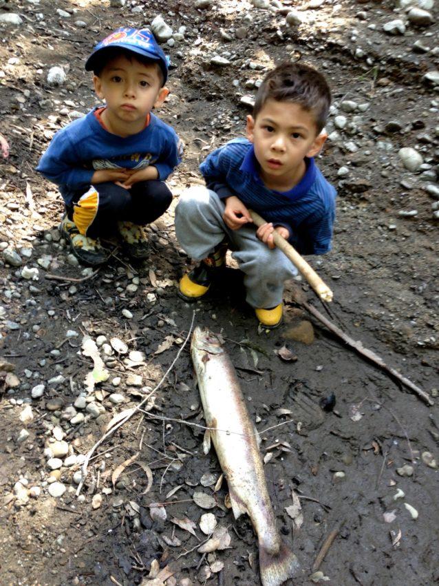 パロアルトとメンロパークの市街を流れるサン・フランシスキート・クリークは、サンフランシスコ・ベイエリアで野生のスチールヘッドが遡上する最後の生息地のひとつだ。しかし、スタンフォード大学のシアーズビル・ダムが重要な通年の川を塞き止め、この川の危機に晒されているスチールヘッドの死の責任は誰にあるのかを次の世代に考えさせている。Photo: Mike Lanza