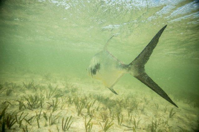 魚を見送る方法。Photo: Matt Jones