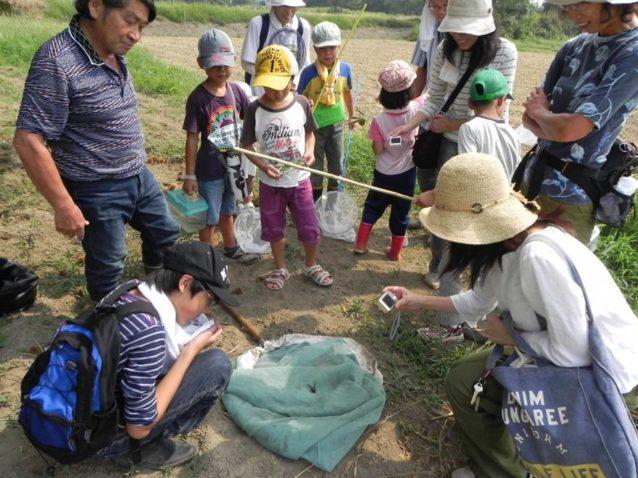 定期的に行われる外来種駆除、ビオトープ管理作業だけでなく、子供向けの「親子自然塾」、高校の野外授業の受け入れなど幅広く活動を行っています