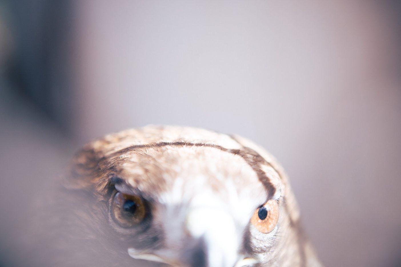 羽の軽さで、愛よりも重く【写真を追加してアップデート】