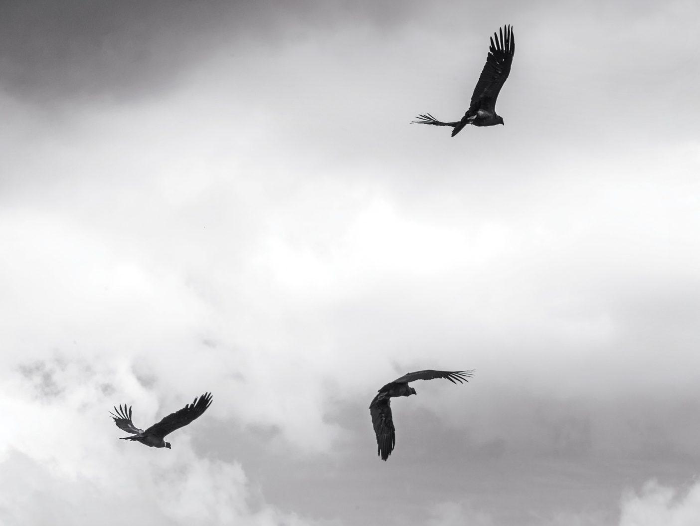 説明は不要だろう。若い鳥たちはリリース後まもなく宙に舞い、仲間たちが何百年もそうしてきたようにチャカブコ・バレーを自由に飛ぶ。LINDE WAIDHOFER