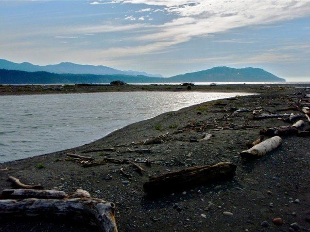 エルワの河口にできた砂州はサーモンの稚魚にとって理想的な生息地だ。Photo: Dylan Tomine