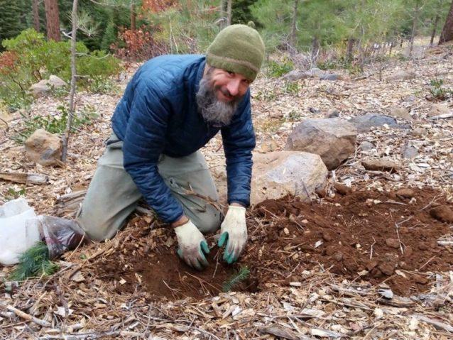サトウマツ植樹の腕を披露するクリス。写真:パタゴニア配送部提供