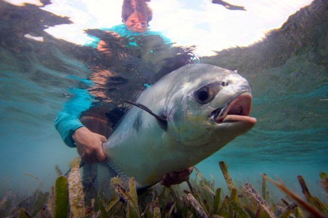ザ・リリース:魚に対する基礎知識と責任ある釣りへの道