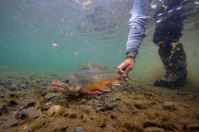 魚が完全に水に浸かっている理想的なイメージ。このような写真を容易に撮影できる水中カメラも主流になりつつある。Photo: Dave McCoy