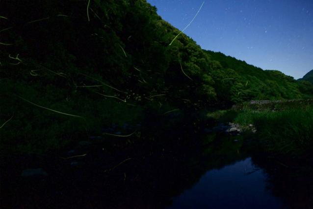 日が暮れると数千匹のホタルが石木川の水面と森の木々を美しく照らす。東京生まれの僕は文字通り息を飲んだ。写真:村山嘉昭