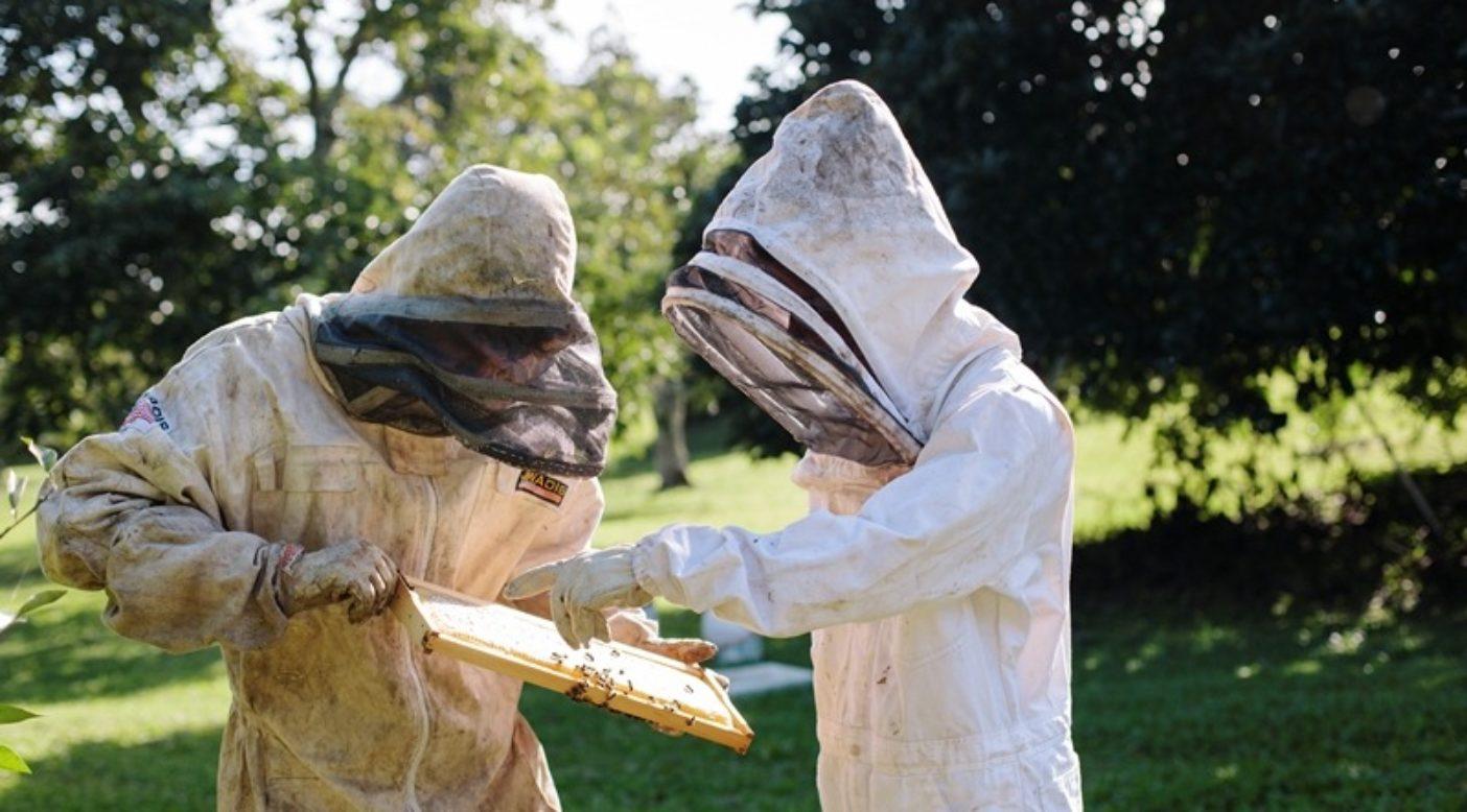 4枚の巣枠の1つを調べ、採蜜可能かどうかを確認するガールフレンドのマリアと僕。ハワイ、ハナ Photo:Anna Riedel