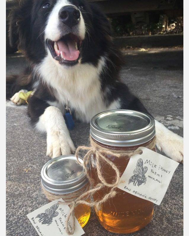 愛犬のモクと瓶詰めのハチミツ。Photo:Hank Gaskell Collection