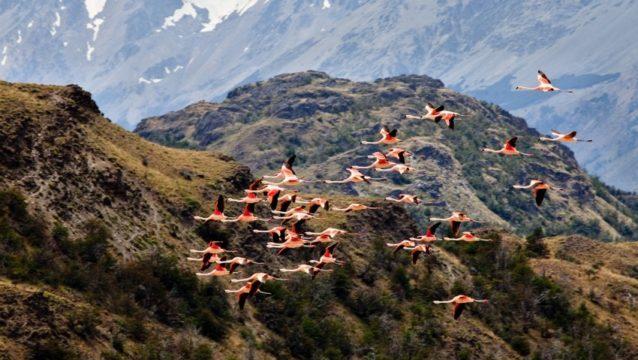 クリスティン・トンプキンスはチリのチャカブコ・バレーの所有地を含め、もう6つの国立公園を設立する計画を抱く。Photo: Linde Waidhofer
