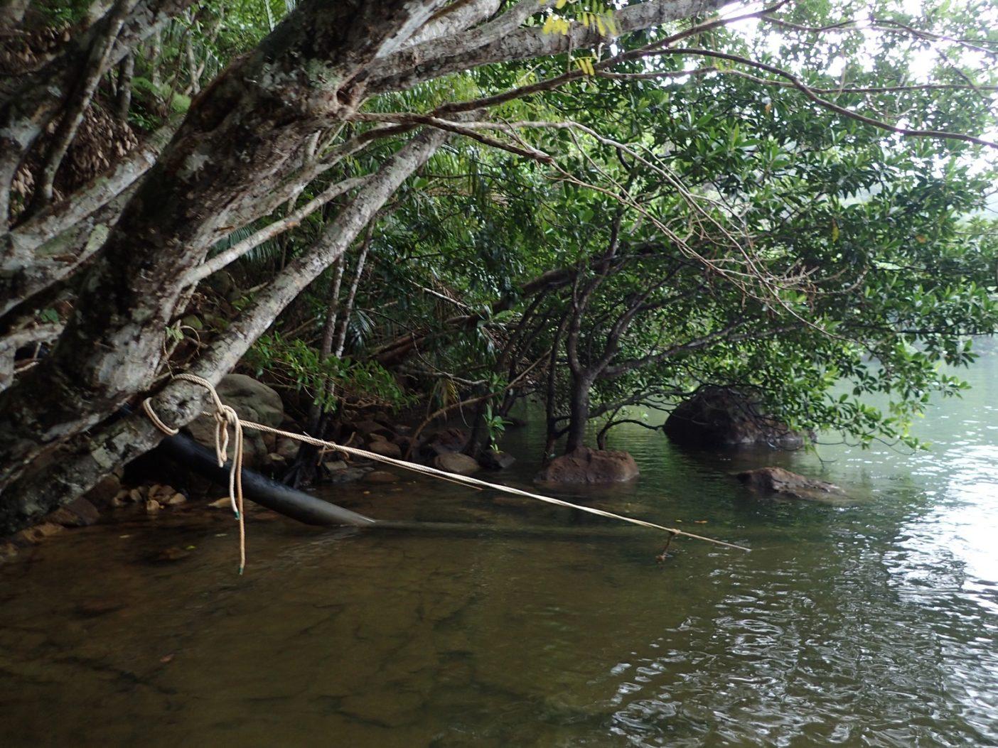 浦内川での取水パイプの終点。ここからさらに山中を上原地区の浄水場まで延びている。写真:中根淳一