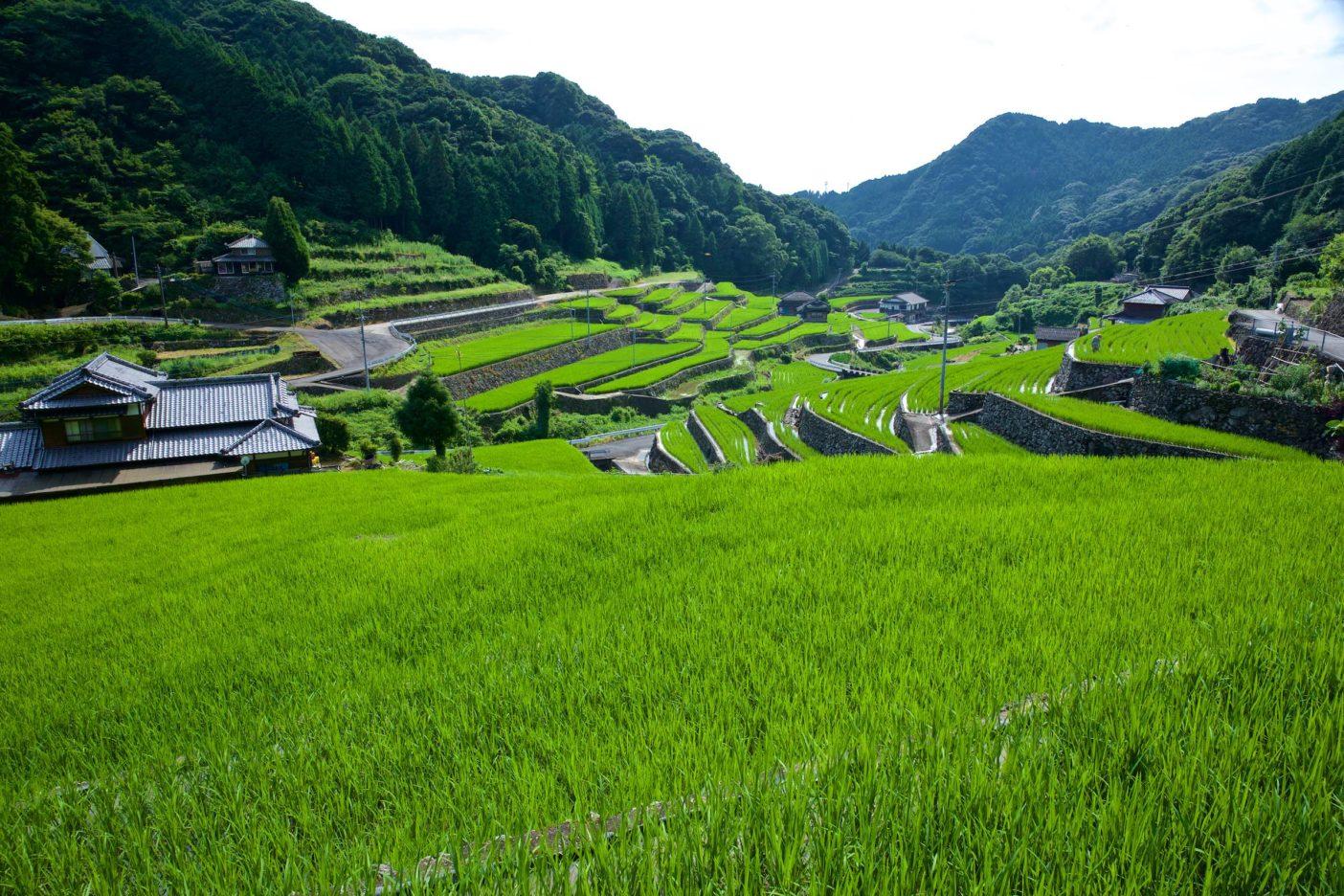日本棚田百選にも選ばれている「日向の棚田」 写真:村山嘉昭