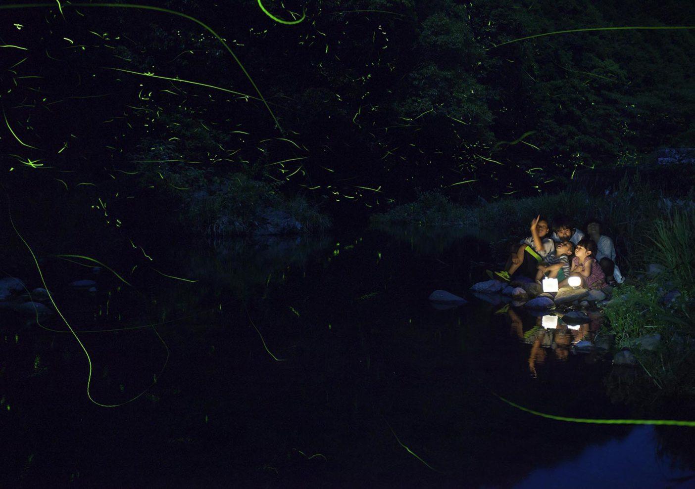 石木川の河原でホタルを鑑賞する子どもたち 写真:村山嘉昭
