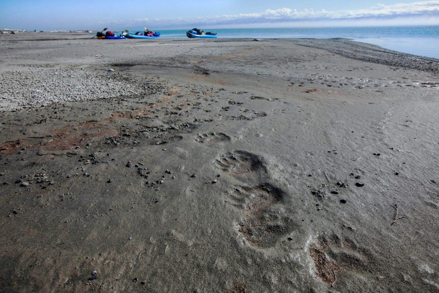 アイシー・リーフに残されたホッキョクグマの足跡。北極海のボーホート海からコンガクット川の終点を守ると同時に文明社会へ戻る着陸場所の役割を果たした砂利地。Photo: Nathaniel Wilder