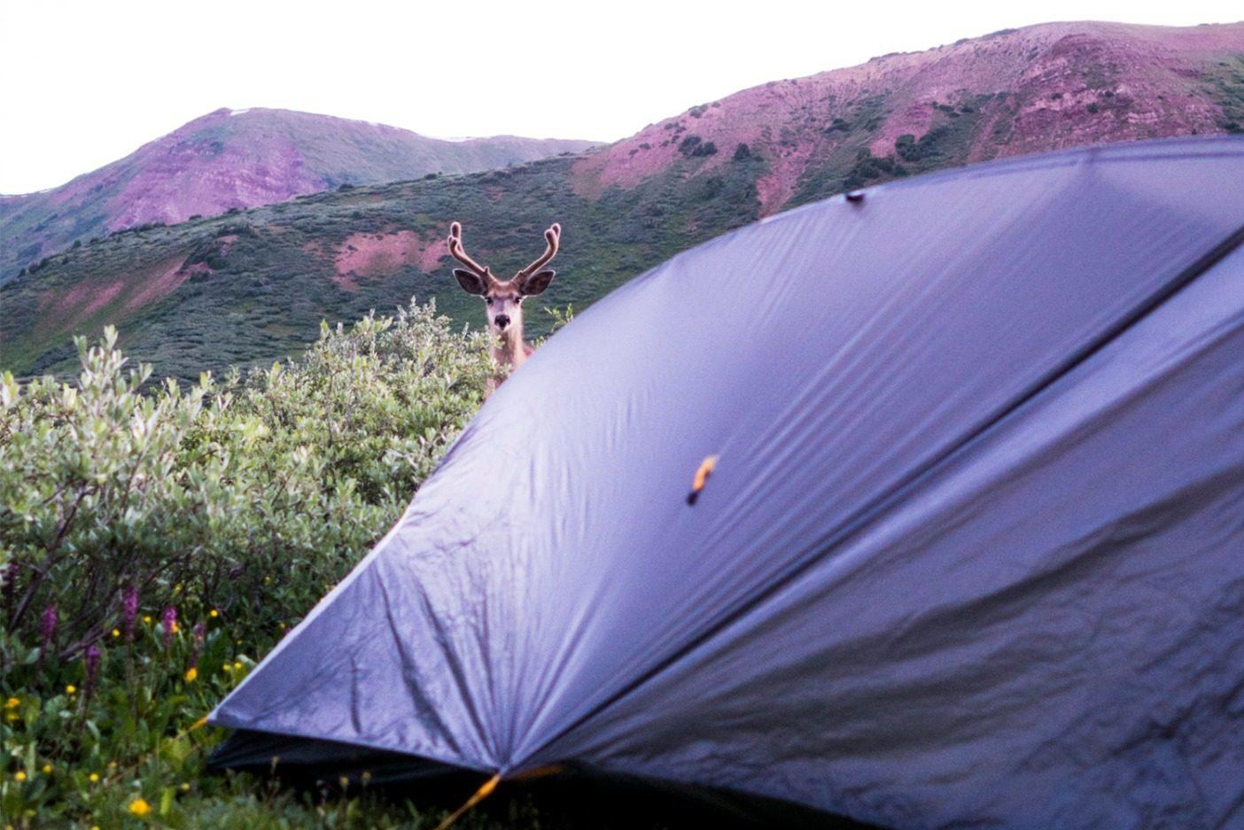 興味津々なローカル。この牡鹿は一晩中僕たちのテントのまわりを飛び跳ねていた。Photo: Carl Zoch