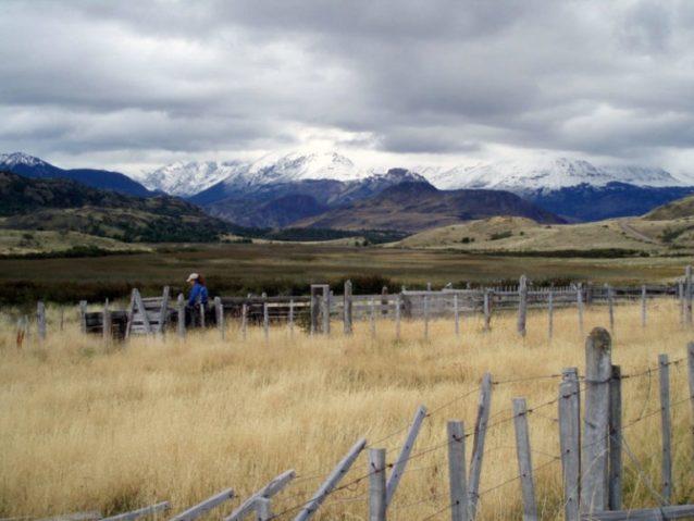 ボランティアによって撤去されることになる古い牧場のフェンス。Photo: Andy Mitchell