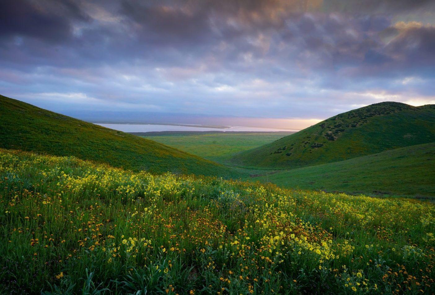 カリゾ平原国定記念物は壮大な野花の開花で知られ、いまもカリフォルニア州最大の自生の草原である。300年前、この地域は毎春、野花を食むアンテロープとヘラジカの放牧地だった。ロサンゼルスからわずか270キロの場所に位置するこの地域は、訪問者に多岐にわたる野生生物と植物種の経験を提供し、その多くが絶滅が脅かされるか危機に瀕している。Photo: Zeiss4Me