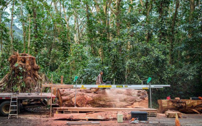 100年前にハワイにやってきたネムノキは世界で最も早く成長する木の種として知られている。それは自生の植物を抑圧する存在であり、またその大きさに比べて弱く、枝は簡単に折れ、人間とその所有物にとって危険だ。ここではベン・ウィルキンソンが新たに切り倒された巨大な木を製材している。Photo: Travis Rummel