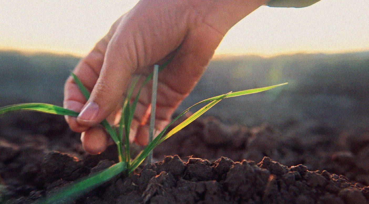 オーガニック基準は土壌からはじまる